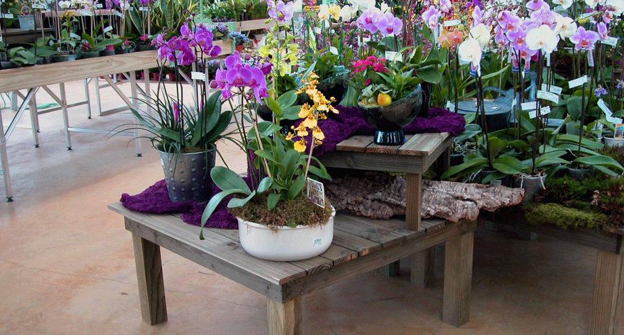 Table grand et petit modèle Vercors