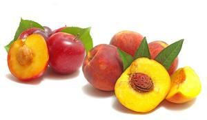 peche-et-nectarine